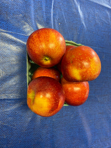 Gala Apple 1 quart