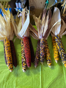 Indian Corn 1 bunch