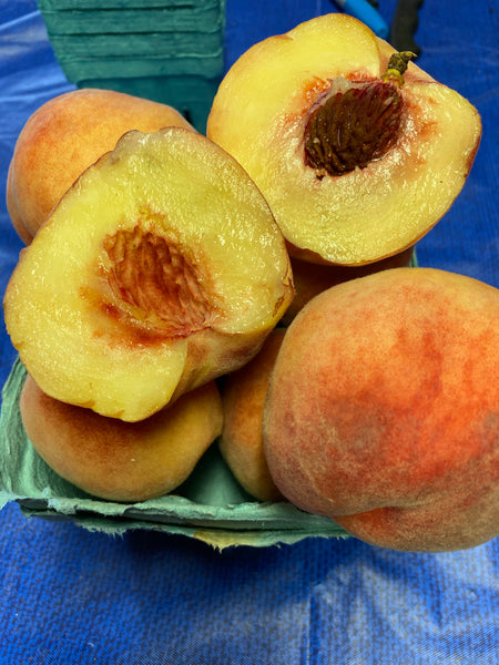 Blushingstar white flesh peach 1 quart