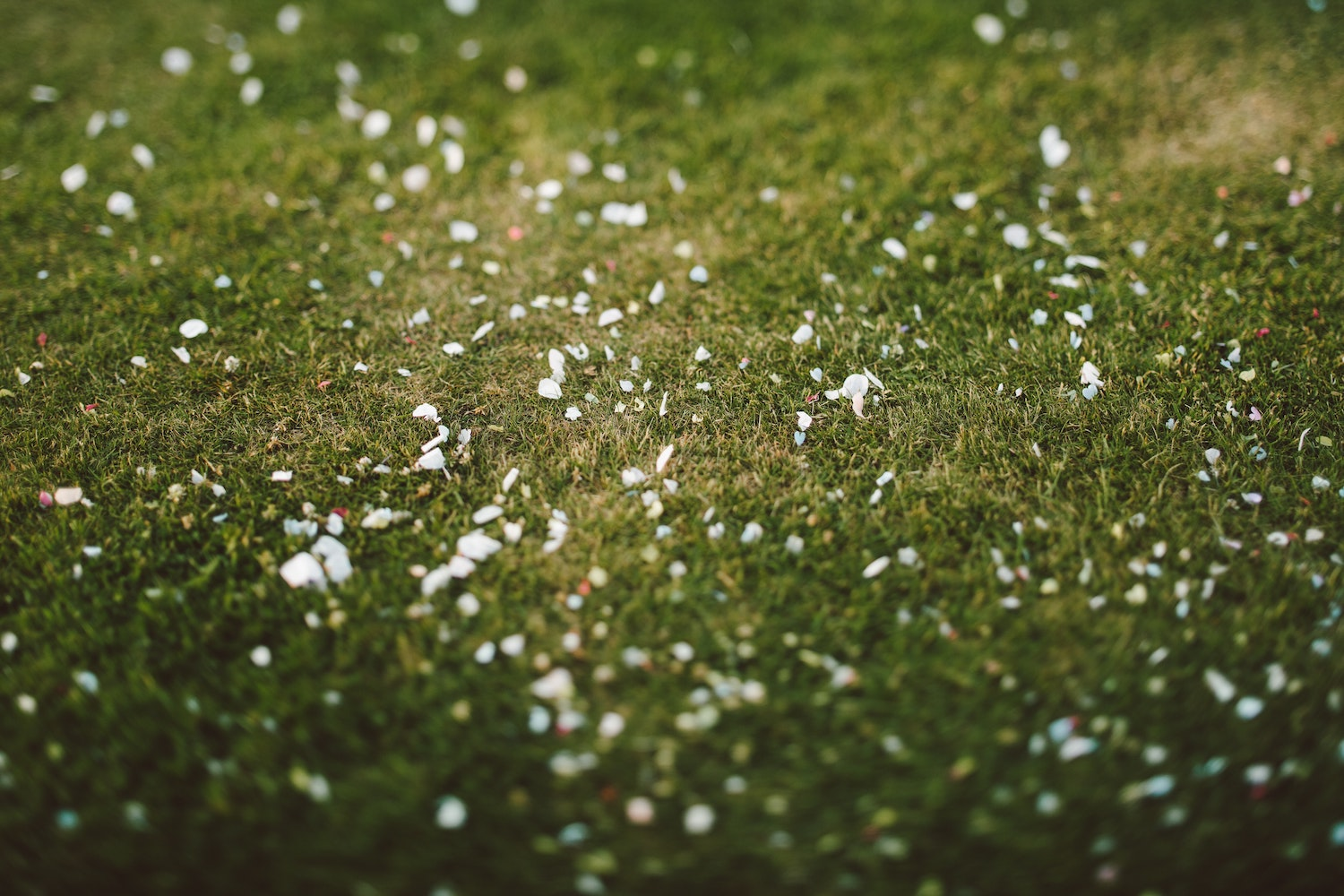 Eco-friendly confetti spread across the grass - image by Jason Wong from Pexels