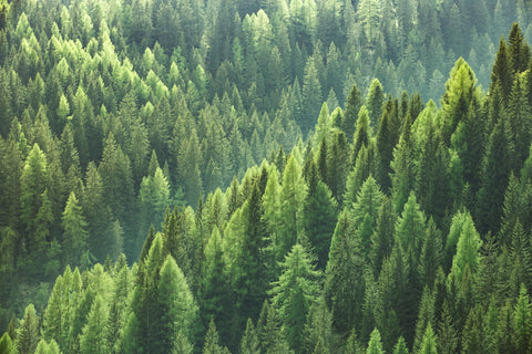 Trees - Freight Brokers ship 125% climate positive, and now so do Saywood!