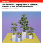 Newsweek Thinks Pot Plants are the Newest Houseplant Trend