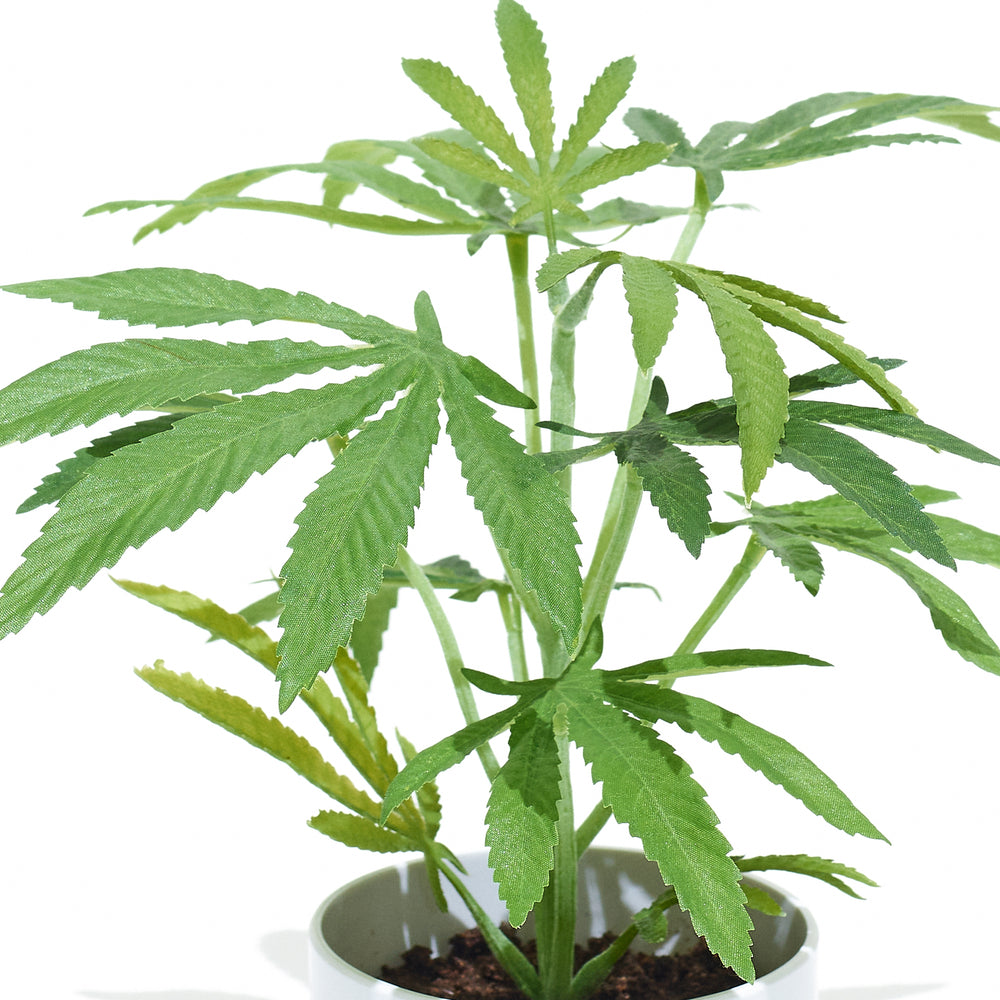 Load image into Gallery viewer, The Clone is the smallest of the Pot Plant collection. This Faux Pot Plant is hyperreal. Pot Plant is an artificial cannabis plant.  Potplant. Pot Plant. The Pot Plant.