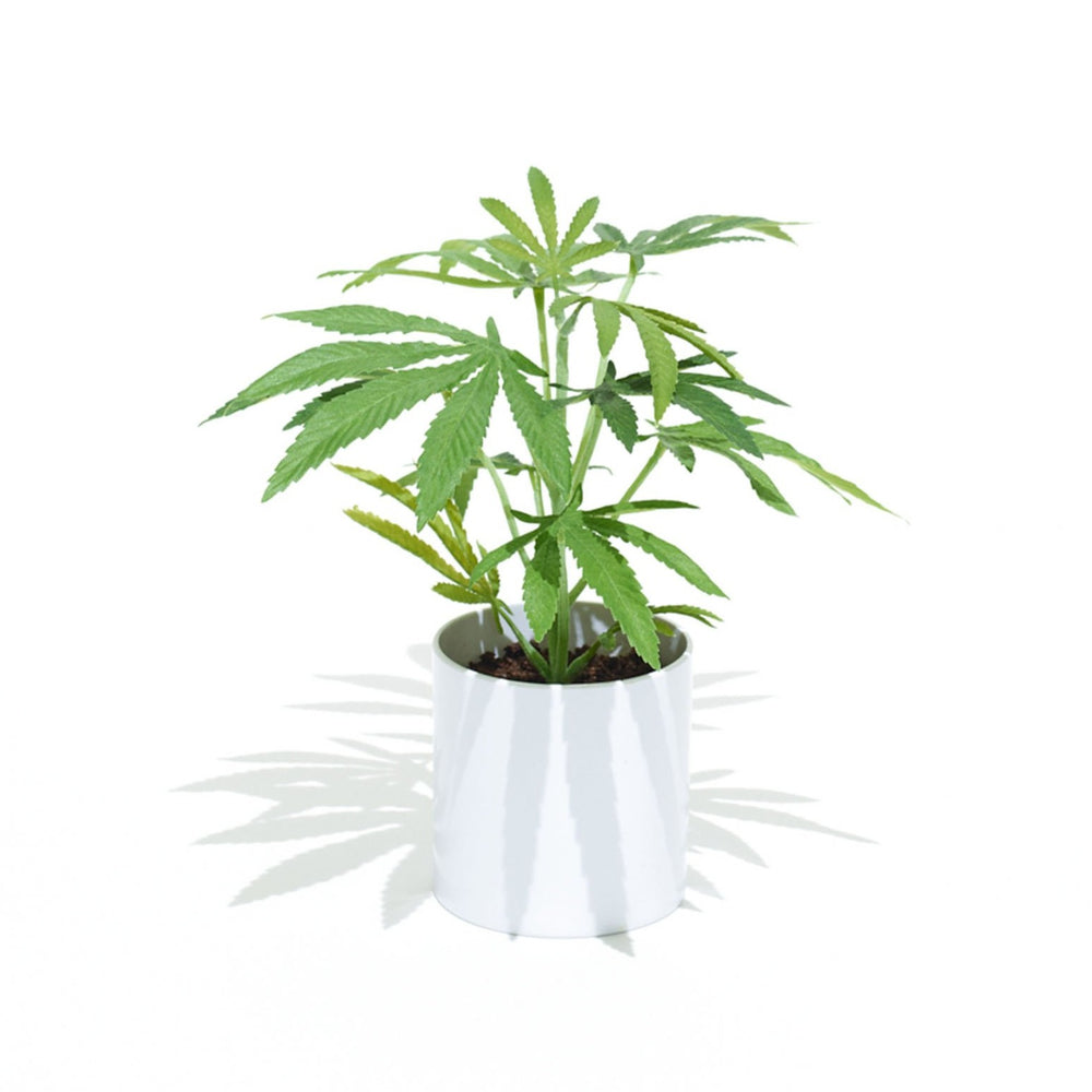The Clone is the smallest of the Pot Plant collection. This Faux Pot Plant is hyperreal. Pot Plant is an artificial cannabis plant.  Potplant. Pot Plant. The Pot Plant.