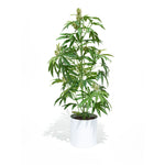 The Mother Pot Plant is a great easy to care for Plant.  This Faux Pot Plant is hyperreal. Pot Plant is an artificial cannabis plant.  Potplant. Pot Plant. The Pot Plant.