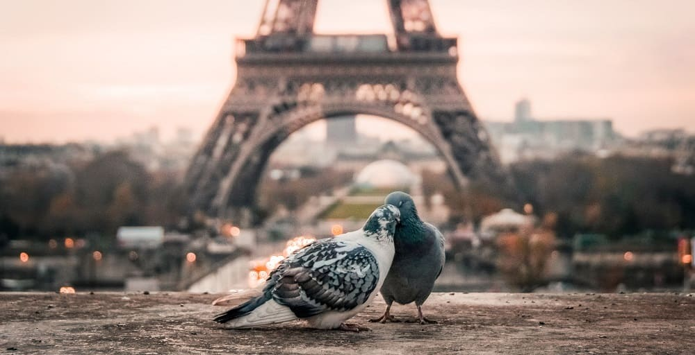Couple de Pigeon sous la Tour Eiffel - Les Origines de la Saint Valentin - Insta-Couple