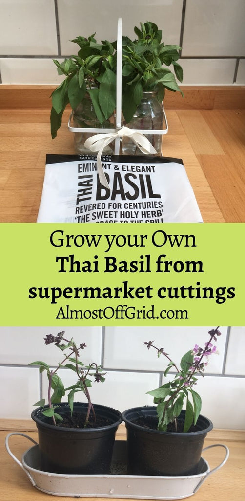 Growing Thai Basil from Cuttings