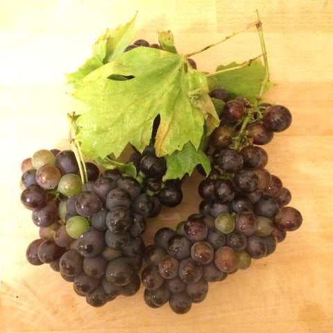 Make wine from garden grapes