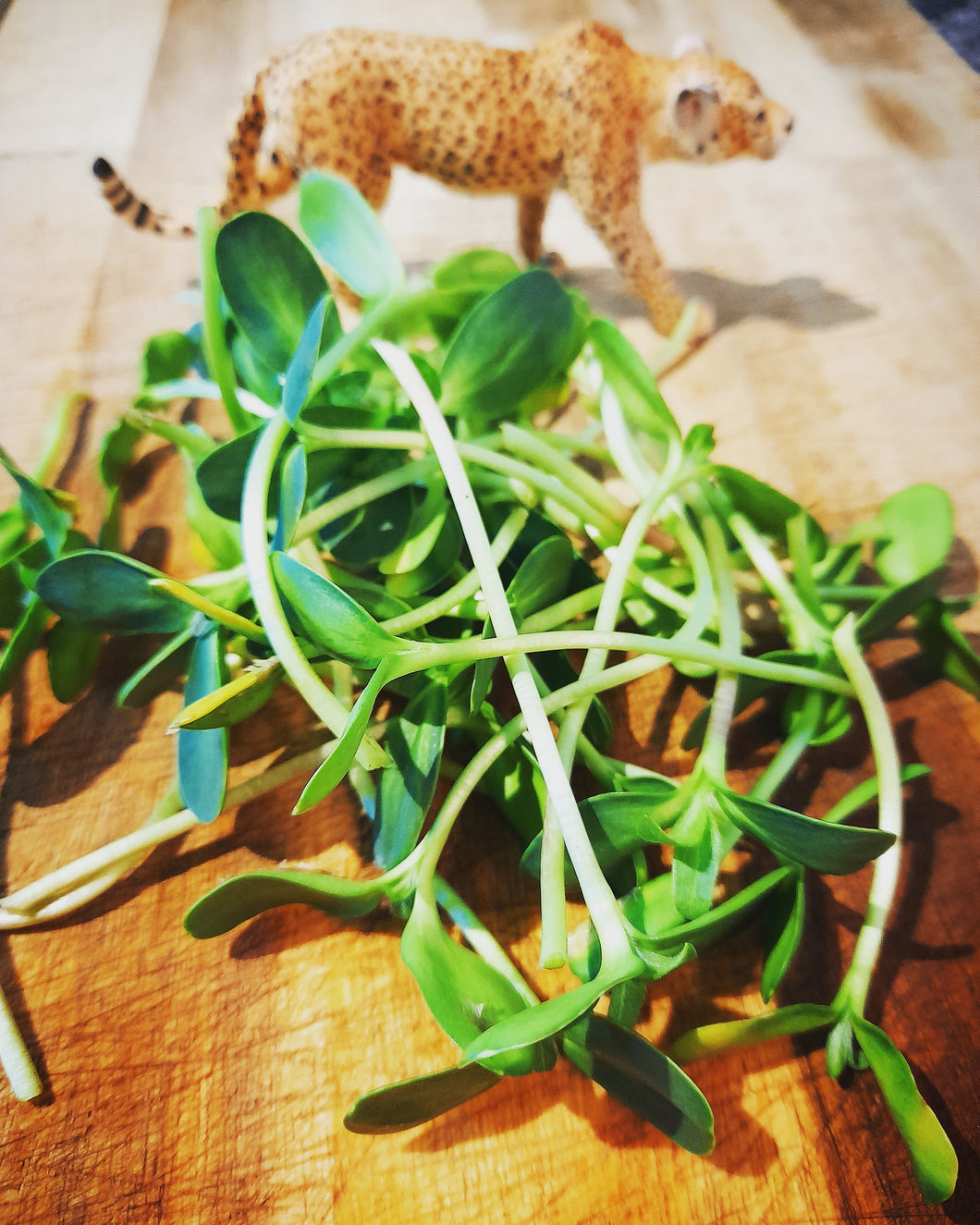 WEEKLY SUBSCRIPTION: Sunflower shoots