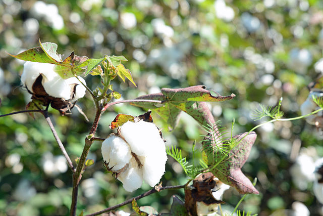 Why Organic Cotton is The Best Choice for Our Kids