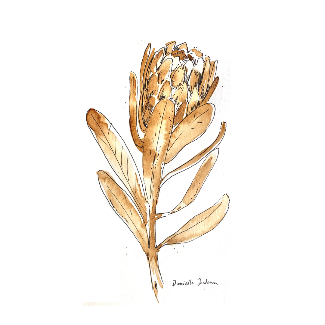 coffee painting: protea print