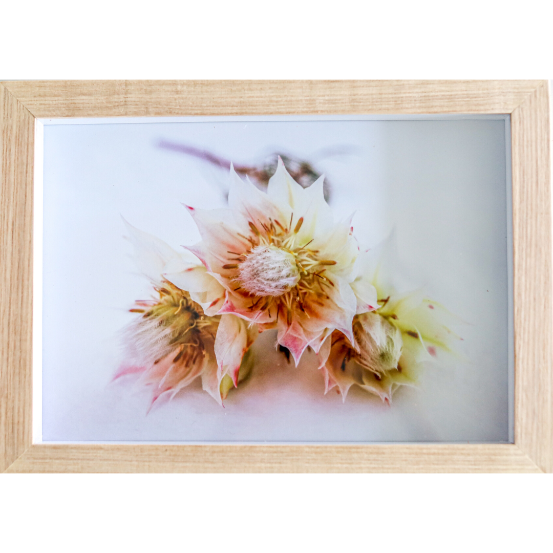 framed print: blushing bride