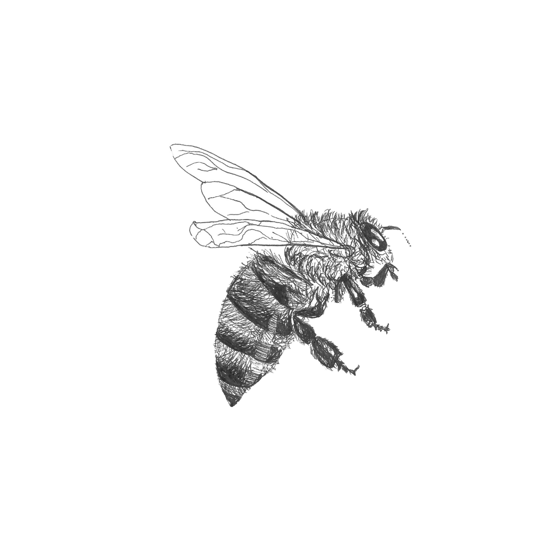 ink drawing: bee print