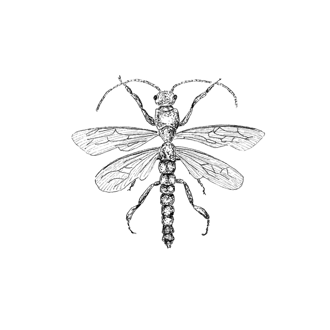 ink drawing: dragonfly print