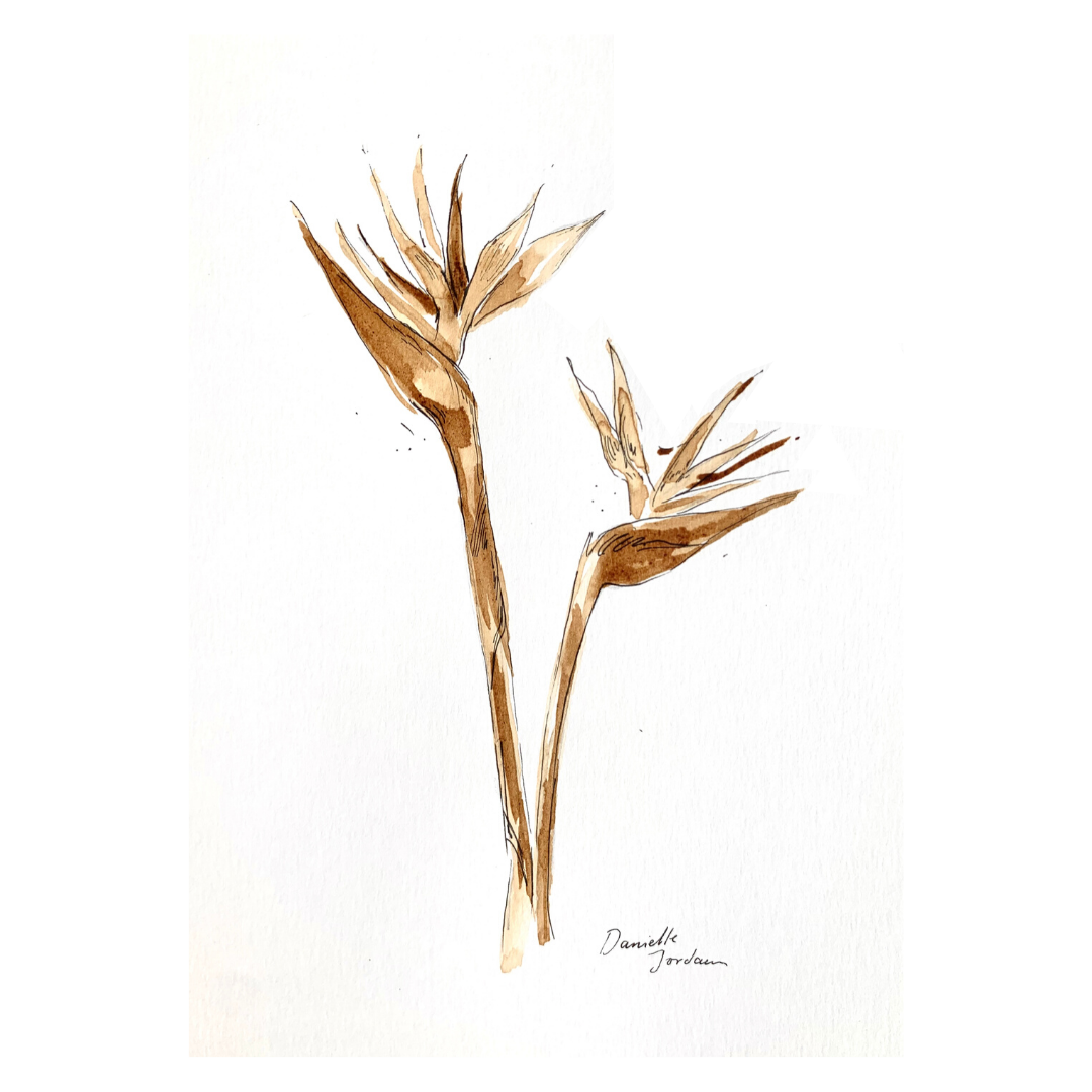 coffee painting: strelitzia print