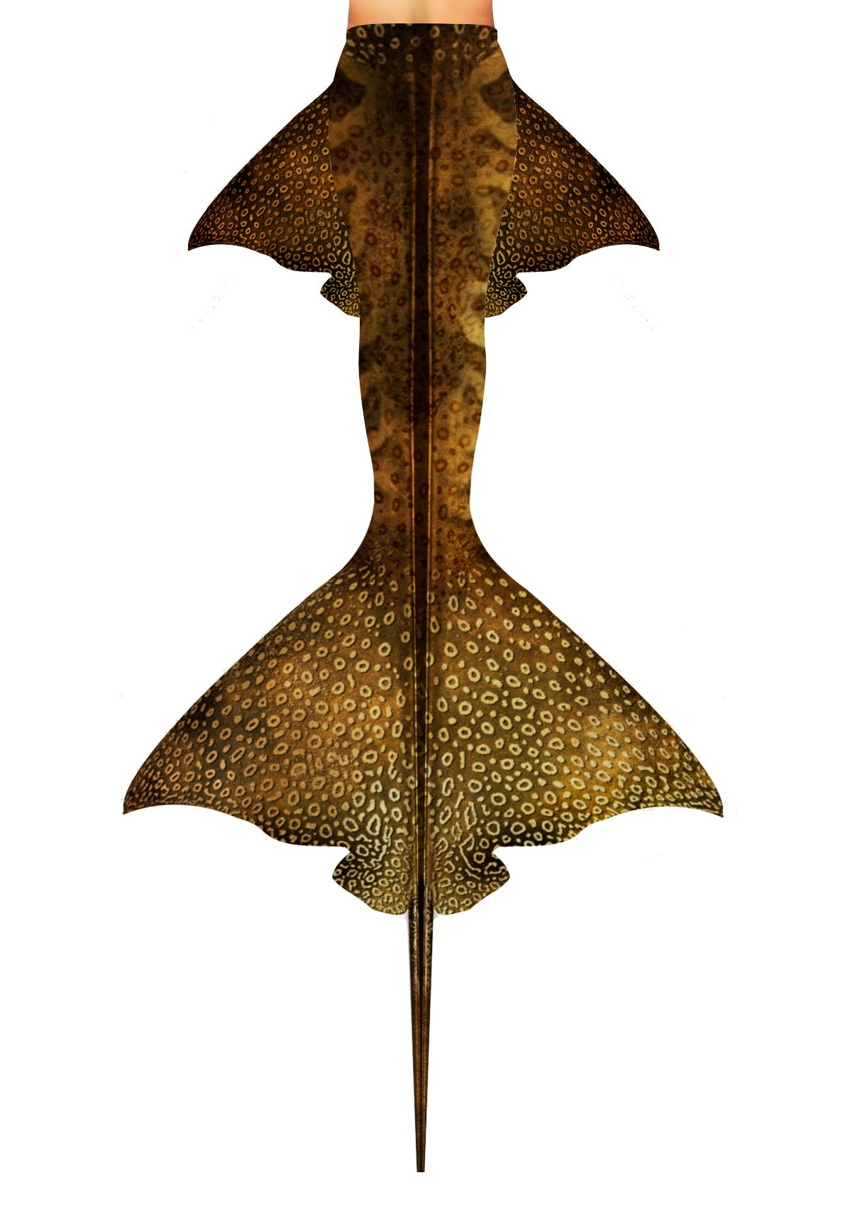 Eagle Ray Mermaid Tail