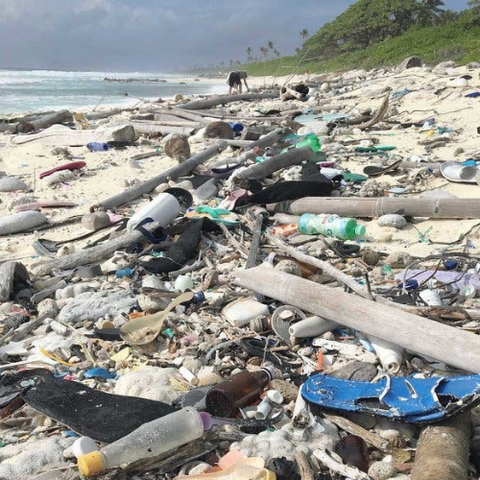 Tooth brush pollution on beach