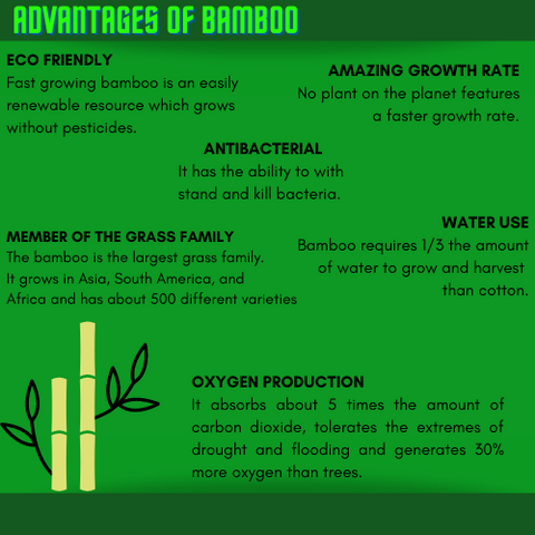 bamboo facts infographic