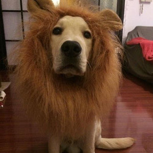 Adorable Lion Mane Dog Costume