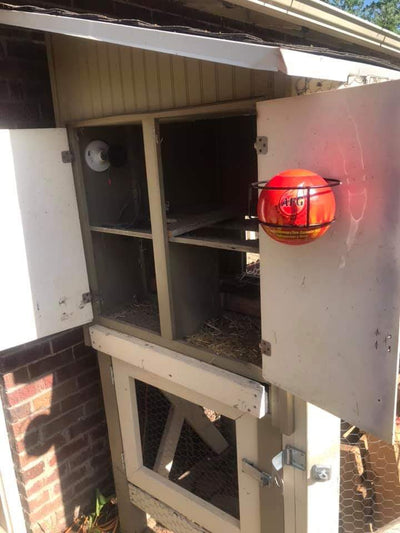 Automatic Fireball, mounted on inside panel of chicken coop, near hear lamp. Image-4