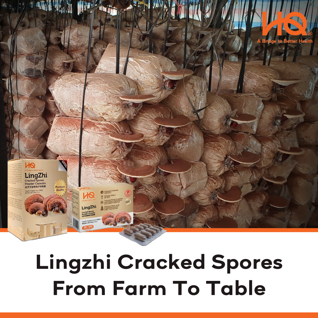 Lingzhi Cracked Spores, From Farm to Table.
