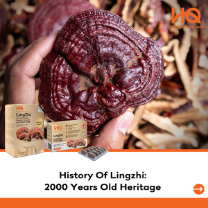 History Of Lingzhi - 2000 Years Old Heritage