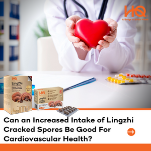Can an Increased Intake of Lingzhi Cracked Spores Be Good For Cardiovascular Health?