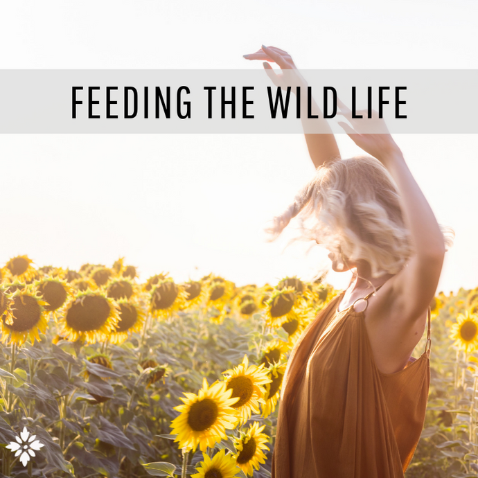Feeding the Wild Life: 2 Weeks of Loving Your Crazy, Wild Life