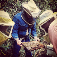 Professor Scott Jeffries of Cal Poly showing the TheraBee team some bees