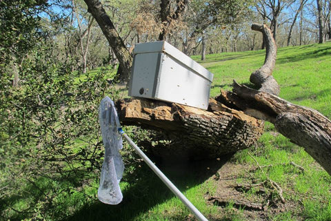 TheraBee Honey Free Bee Swarm Removal with our swarm box and bee net