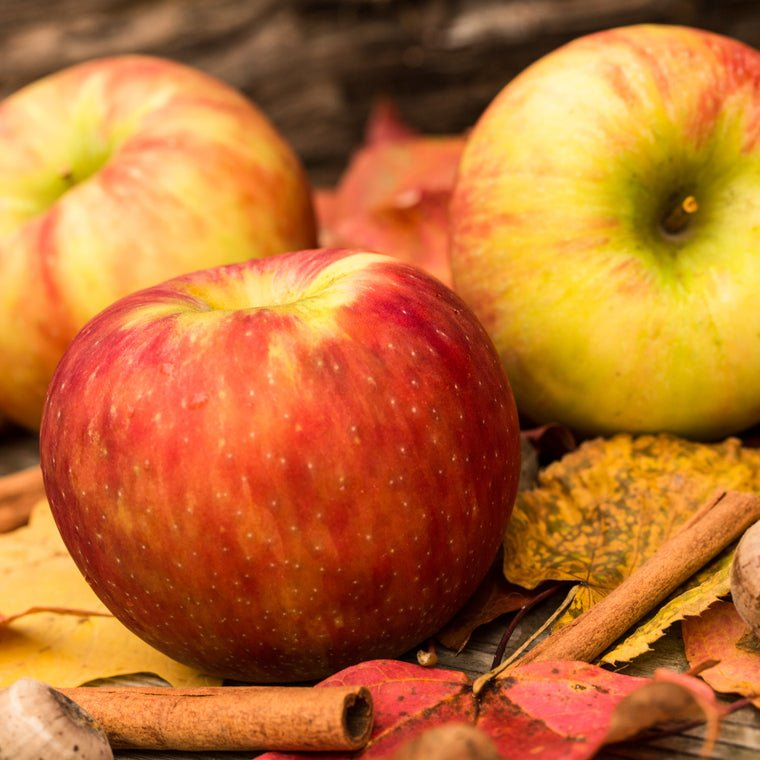 Apples and Oak - The Columbia Fragrance Co.