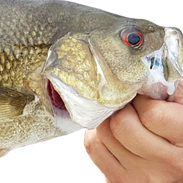 Top 10 Bass Lures