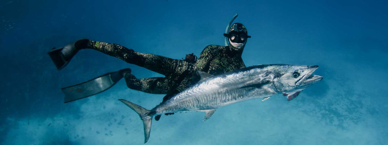 Spearfishing & Dive