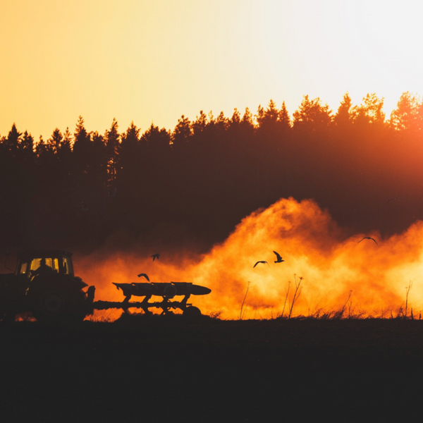 Tractor plowing Hemp at sunset shot by Mika Luoma