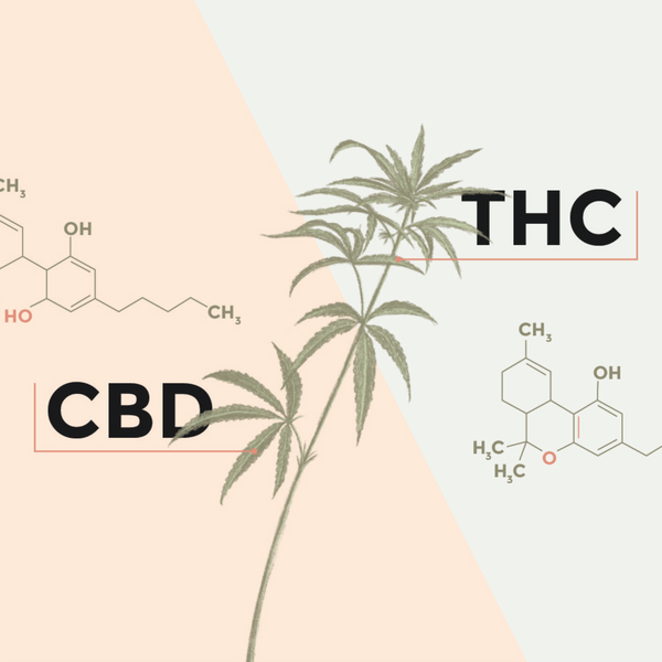 Difference between CBD and THC infographic