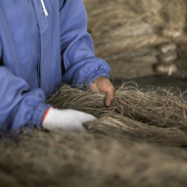handling hemp for the film, Patagonia's: Misunderstood: A Brief History of Hemp in The United States
