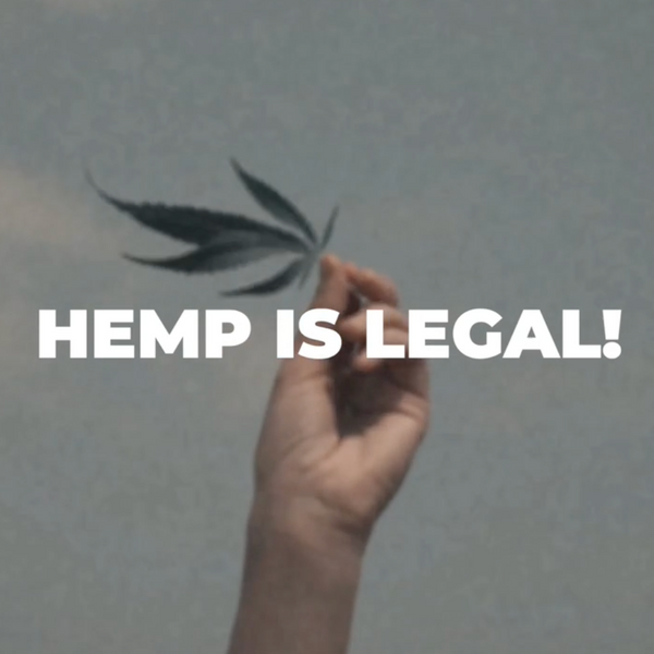 Hemp is legal text over hand holding hemp leaf