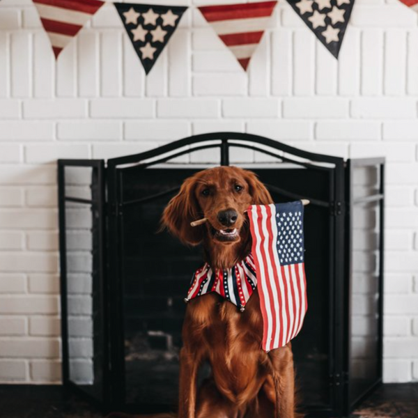 Dog holding US flag in front of fireplace