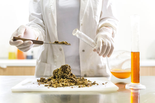 Scientist doing cannabis research in a lab