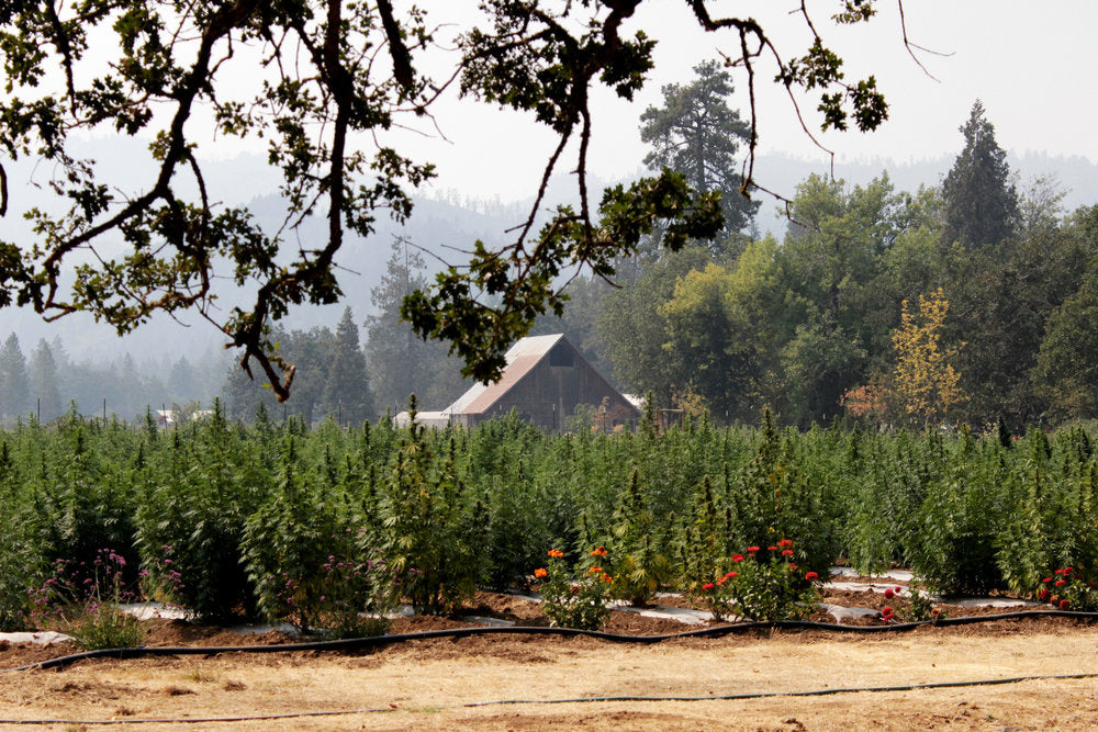 East Fork Cultivars Hemp Farm