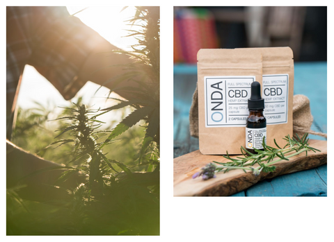 Hemp leaves and Onda CBD products