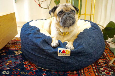 Pug sitting on I Love Bad Hemp dog bed