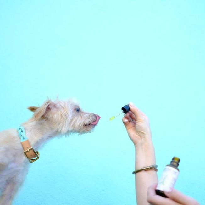 Blooming Culture Calm That Roar with 500mg CBD lifestyle shot with dog and blue background by Svn Space.