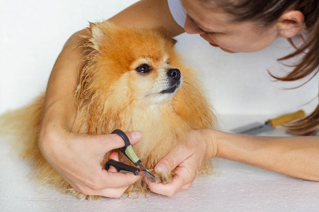 How to trim dogs nail