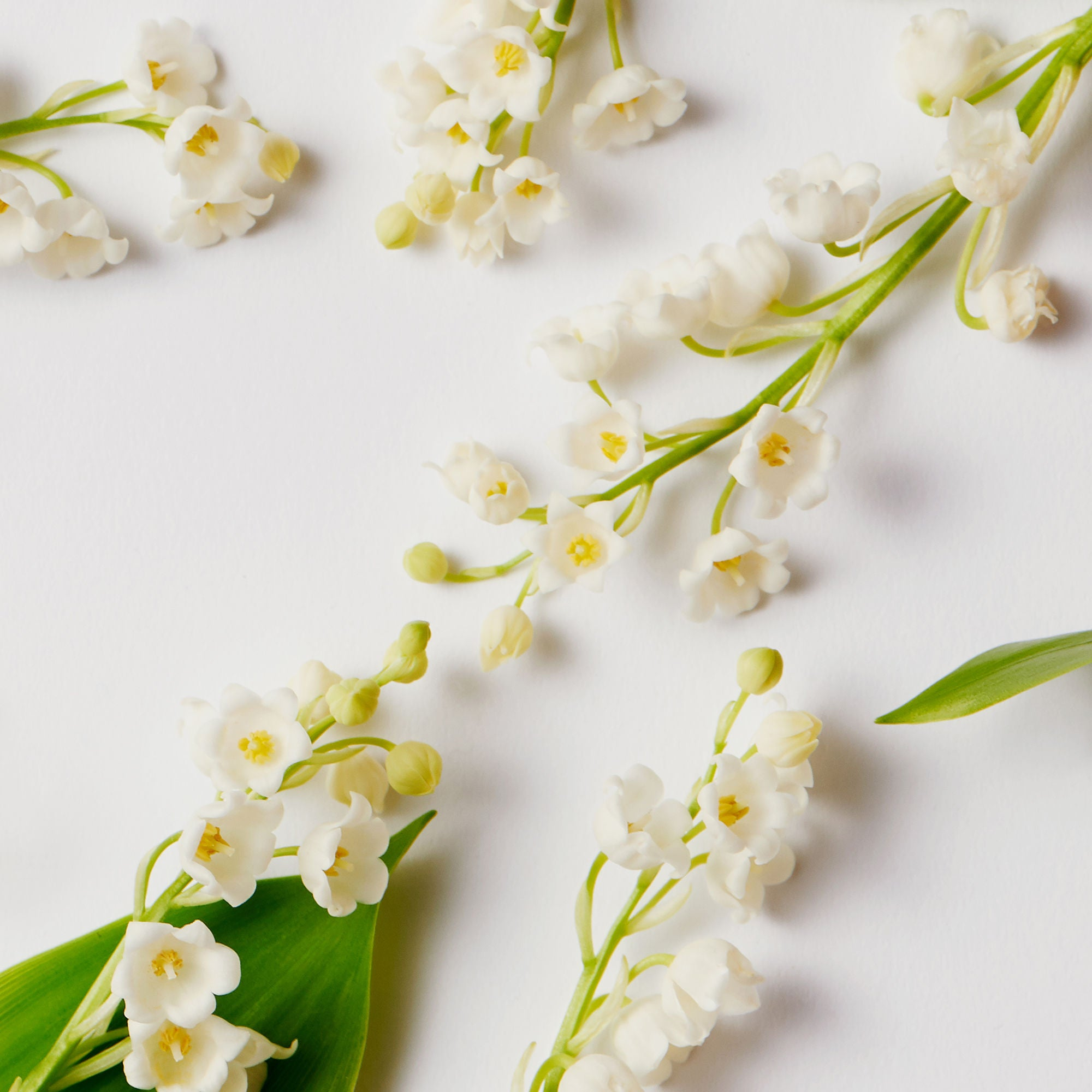 Virgin Lily Of The Valley Eric Buterbaugh Fragrances