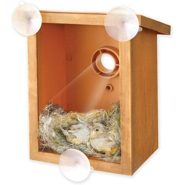 DIY Sucker Bird Nest