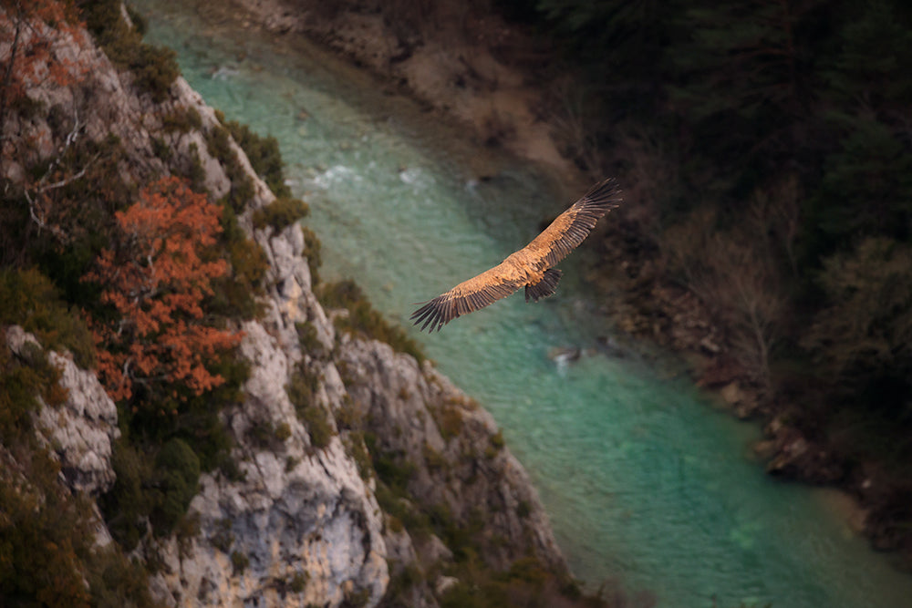 Photographie de Nature - Vautours et Verdon - Tirage Photo