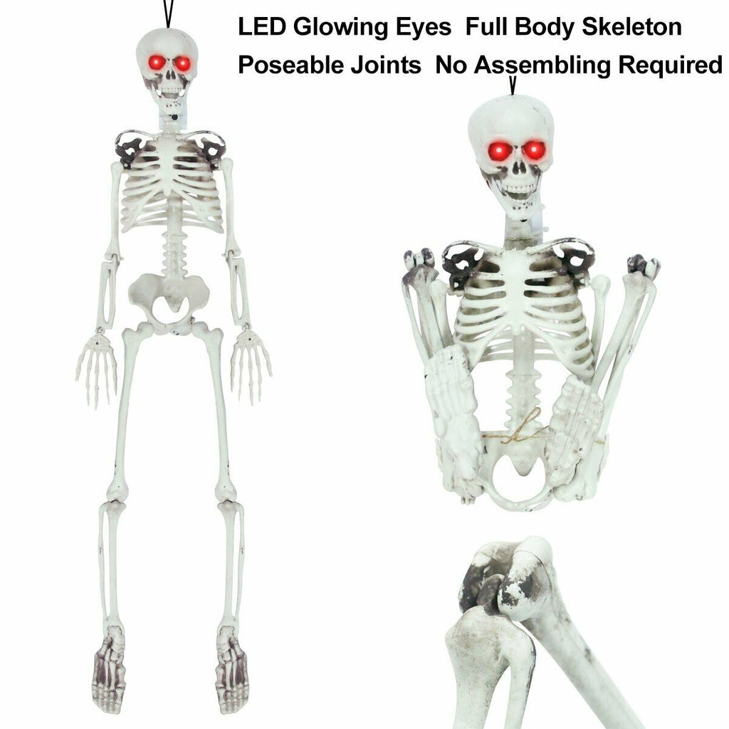 Posable Skeleton - Life Size Posable Skeleton