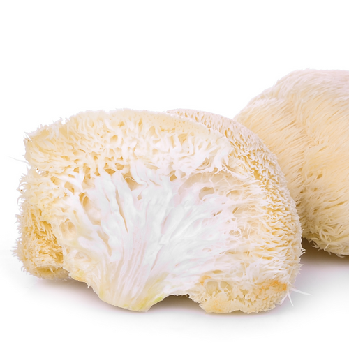 Organic Lion's Mane Mushroom Extract 10:1 (Memory, Focus, Concentration)