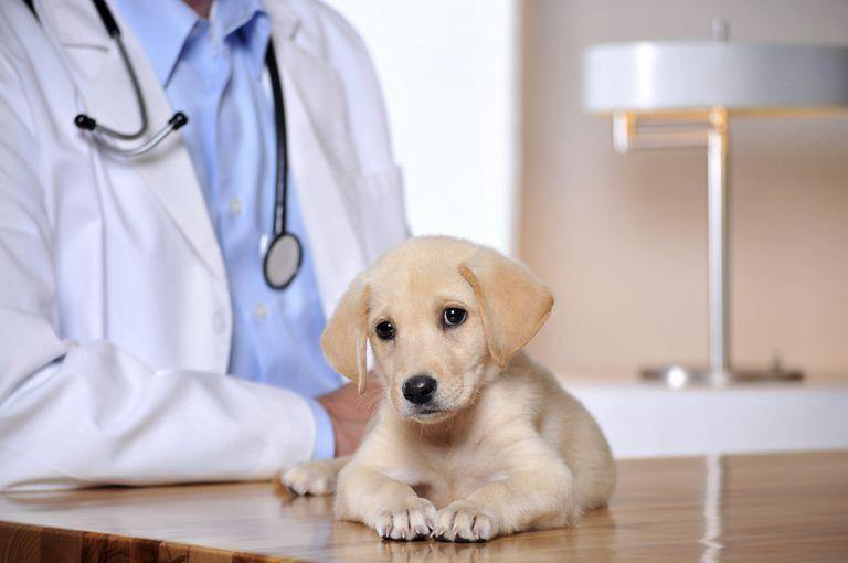 Getting Pet Insurance: What You Need to Know